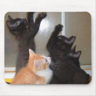 Gatos 36 Mousepad del maullido
