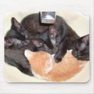 Gatos 37 Mousepad del maullido