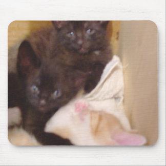 Gatos 38 Mousepad del maullido