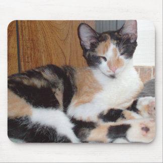 Gatos 39 Mousepad del maullido