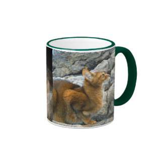 Gatos abisinios taza de café