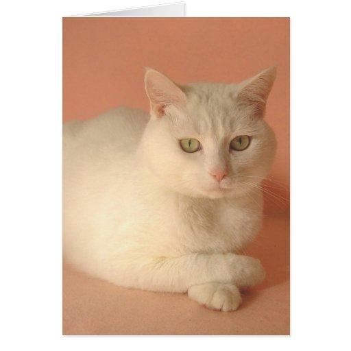 Gatos adaptables de la tarjeta del día de San