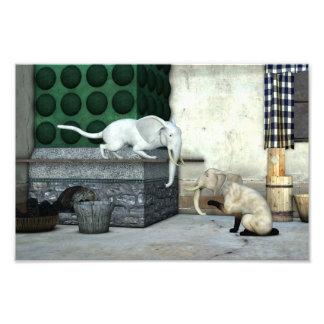Gatos adorables del elefante cojinete