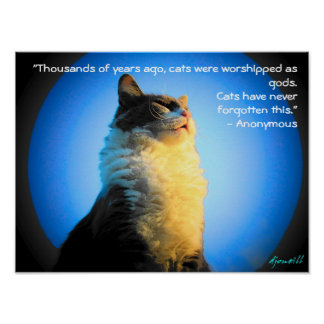 Gatos adorados como dioses con cita anónima póster