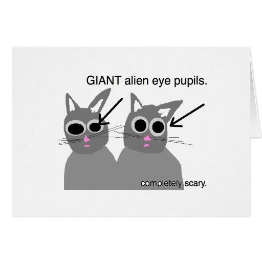 gatos asustadizos tarjeta