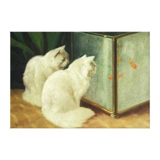 Gatos blancos que miran el Goldfish Impresiones En Lona