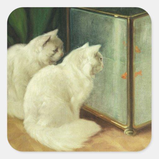 Gatos blancos que miran el Goldfish Pegatina Cuadrada