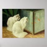 Gatos blancos que miran el Goldfish Póster