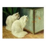 Gatos blancos que miran el Goldfish Tarjeta Postal