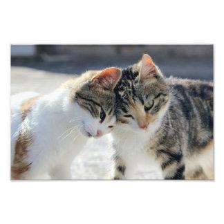 gatos cojinete