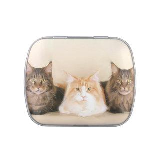 Gatos de Coon de Maine Jarrones De Dulces