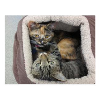 Gatos de la concha y de Tabby Postal