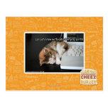 Gatos de Lol con USB Tarjeta Postal