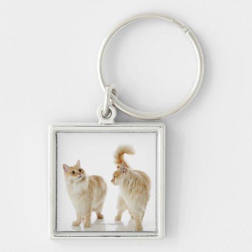 Gatos de Munchkin Llavero