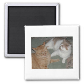 Gatos de Tabby anaranjados Imán De Frigorifico