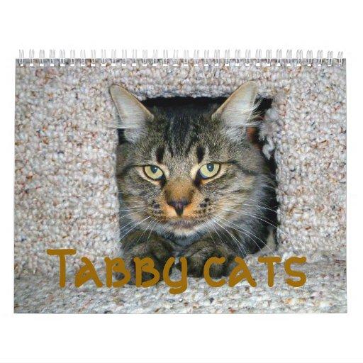 Gatos de Tabby Calendario