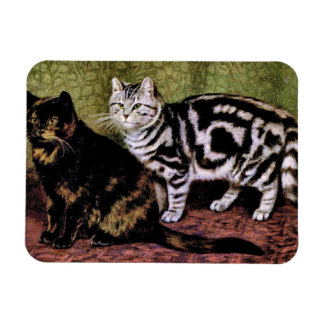 Gatos de Tabby de la concha y de la plata Iman De Vinilo