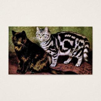 Gatos de Tabby de la concha y de la plata Tarjetas De Visita