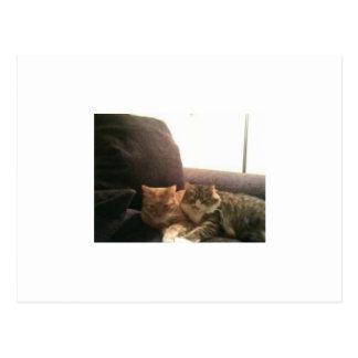 Gatos de Tabby Postal