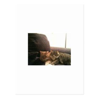 Gatos de Tabby Postales