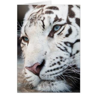 Gatos de tigre blancos toda la ocasión tarjeta de felicitación