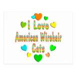 Gatos de Wirehair del americano del amor Postal