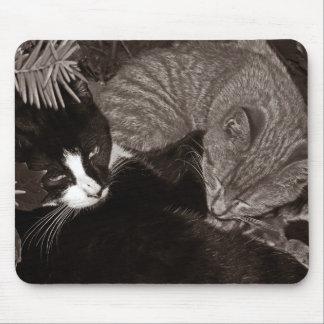 Gatos de Yin Yang Alfombrillas De Ratón