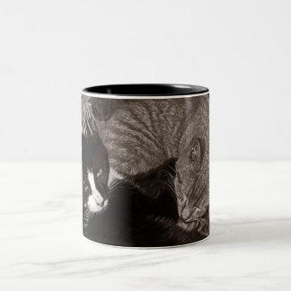 Gatos de Yin Yang Taza De Café