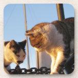 Gatos del Boatyard Posavaso