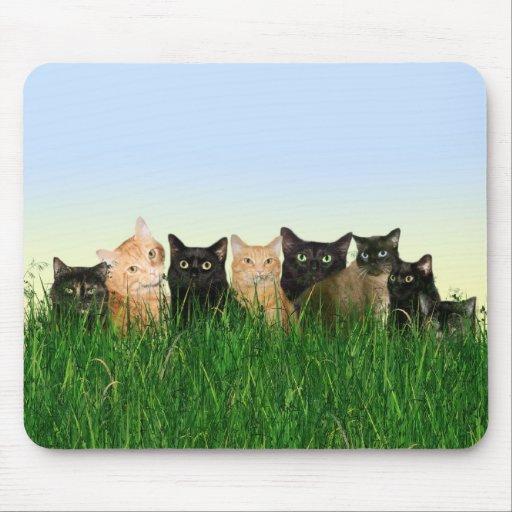 Gatos del gatito en la hierba alfombrillas de ratón