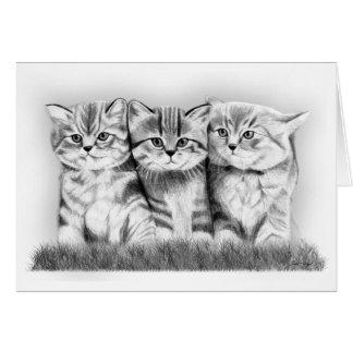 Gatos del gatito tarjeta pequeña