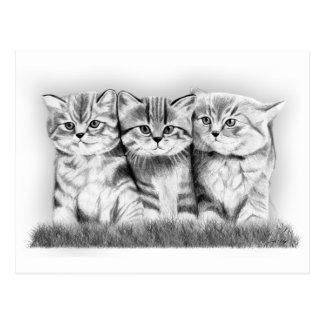Gatos del gatito tarjetas postales