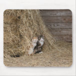 Gatos del granero tapete de raton