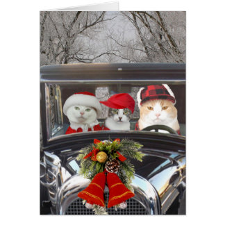 Gatos del navidad en coche tarjeta de felicitación