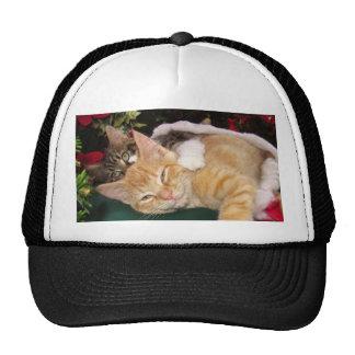 Gatos del navidad, gatitos lindos que abrazan, son gorras