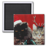 Gatos del navidad iman de nevera
