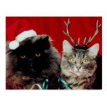 Gatos del navidad tarjeta postal
