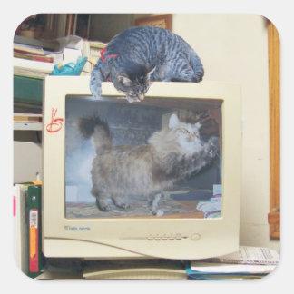 gatos del ordenador pegatina cuadrada