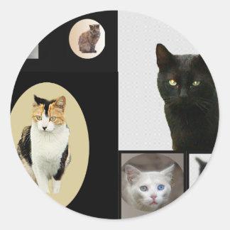 Gatos del parque de Kennedy Pegatina Redonda