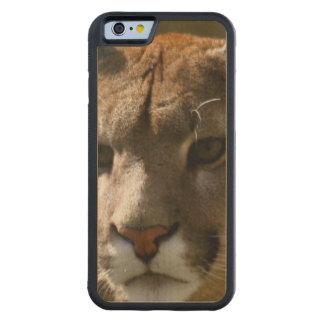 Gatos del puma funda de iPhone 6 bumper arce