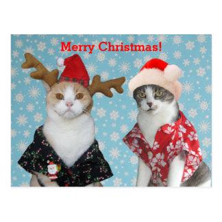 Gatos divertidos en camisetas hawaiano del navidad tarjetas postales
