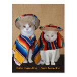 Gatos divertidos en los sombreros para la postal