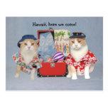 Gatos divertidos en travesía postales