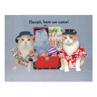 Gatos divertidos en travesía tarjetas postales
