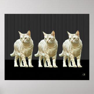 Gatos elegantes poster