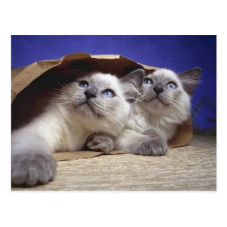 Gatos en bolsa de papel postal