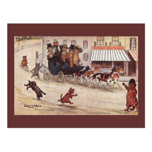 Gatos en del coche de la raza la calle principal a tarjeta postal