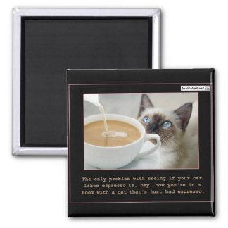 Gatos en el café express iman