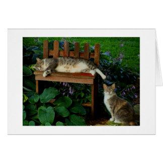 Gatos en el jardín tarjeta pequeña