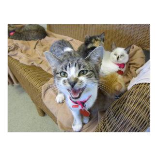 Gatos en el sofá postales